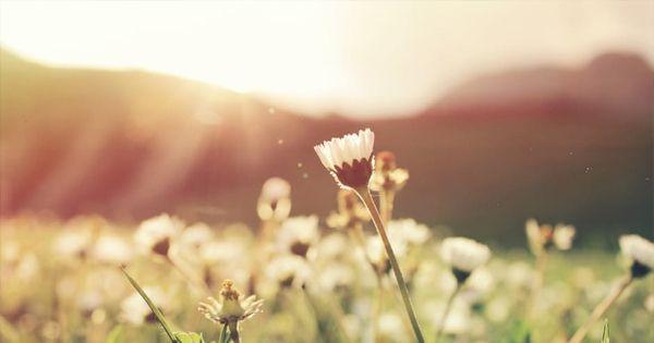 Terapia Floral Integrativa Semipresencial