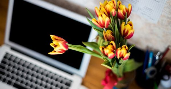 Terapia Floral Integrativa Online