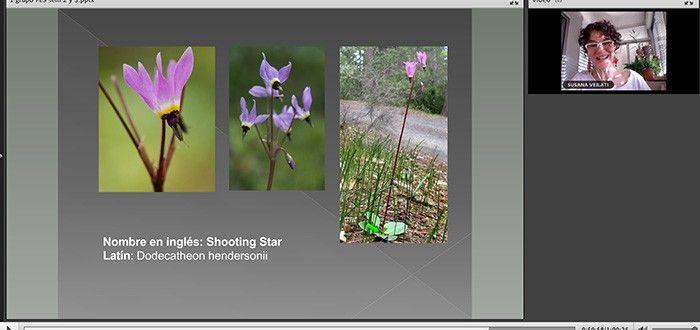 Sistema floral de California