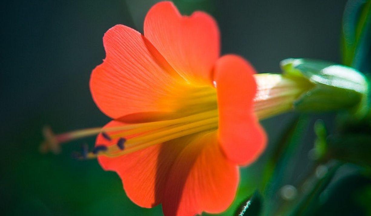 Apertura de sede de la Escuela de Terapia Floral Integrativa en Bolivia